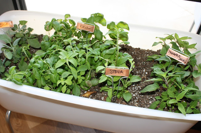 True Food Kitchen Mini Bathtub with Fresh Herbs